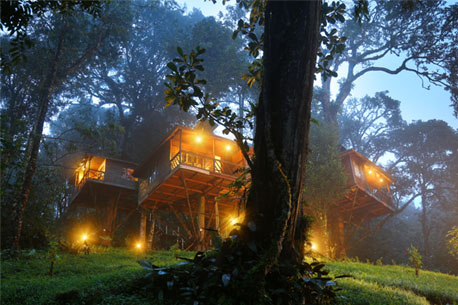 Munnar naturezone resort