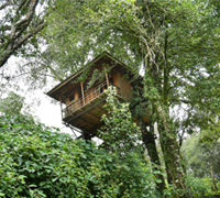 rudraleisureservices packages - treehouse